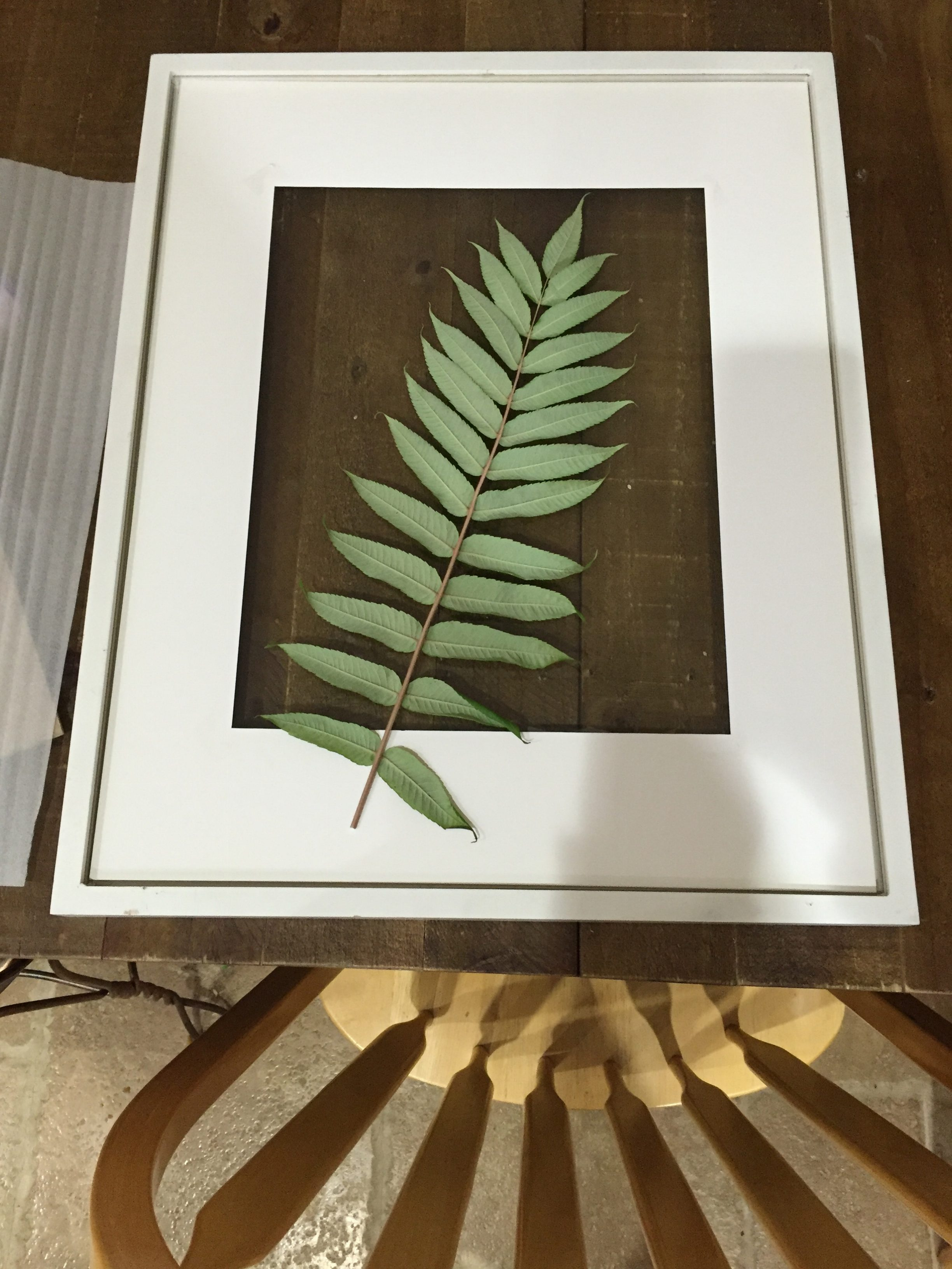 Framed botanicals are absolutely dreamy! This tutorial will show you how to make your own framed greenery for FREE, in less than 10 minutes!